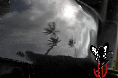 Palmtrees reflection